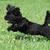 perro · hierba · negro · feliz · diversión · vida - foto stock © LIstvan