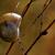 Буш · сторона · коричневый · улитки · филиала - Сток-фото © lkpro