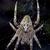 веб · Spider · черный · белый · лапа - Сток-фото © lkpro
