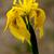 падение · воды · красный · лепесток · цветок - Сток-фото © lkpro