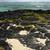 faible · marée · algues · plage - photo stock © lkpro