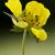 fleur · jaune · fleur · printemps · lumière · feuille · vert - photo stock © lkpro