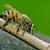 abeille · pièce · bois · peu · vert · ligne - photo stock © lkpro