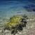 tengerpart · kő · kő · kanca · Mauritius · víz - stock fotó © lkpro