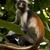 mono · ojos · isla · naturaleza · palma · boca - foto stock © lkpro
