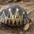 madagascars turtle stock photo © lkpro