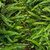 ツリー · ジャングル · 公園 · ニュージーランド - ストックフォト © lostation