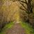 осень · пейзаж · пути · тропе · группа · красочный - Сток-фото © lostation