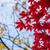 ağaçlar · alanları · sonbahar · Almanya · ağaç · doğa - stok fotoğraf © lostation