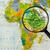 térkép · szövetségi · demokratikus · köztársaság · Etiópia · üveg - stock fotó © lostation