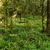 yosun · ağaç · eğreltiotu · bahar · orman · manzara - stok fotoğraf © lostation