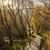 norte · Nova · Zelândia · grama · floresta · natureza · verde - foto stock © lostation
