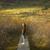 woman walks along boardwalkpath traverses wetlands stock photo © lostation