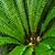 fern forest at kepler track stock photo © lostation