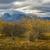 manzara · ağaçlar · sonbahar · alanları · düşmek · Yeni · Zelanda - stok fotoğraf © lostation