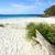 luz · do · sol · ícone · praia · ondas · quente - foto stock © lovleah