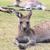 オーストラリア人 · 風景 · 草 · 日没 · 砂漠 · 夏 - ストックフォト © lovleah