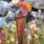 pecado · aves · aves · color · colores - foto stock © lovleah