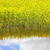 termény · völgy · Saskatchewan · Kanada · természet · tájkép - stock fotó © lovleah