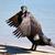 great cormorant   phalacrocorax carbo stock photo © lovleah