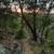 sunrise glenbrook blue mountains australia stock photo © lovleah