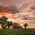 gansos · pôr · do · sol · dois · terra · água · natureza - foto stock © lovleah
