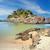 sello · rocas · Australia · mirando · atrás · playa - foto stock © lovleah