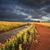 tormenta · australiano · occidental · nueva · gales · del · sur · cielo · paisaje - foto stock © lovleah