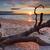 naplemente · növénytan · Ausztrália · nyár · Sydney · tengerpart - stock fotó © lovleah