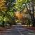 листьев · осень · улице · строительство · фон - Сток-фото © lovleah