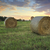 hay bales in the hawkesbury fields with a pretty sunrise sky beh stock photo © lovleah