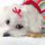 aanbiddelijk · hond · winter · trui · weinig - stockfoto © lovleah