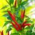 vermelho · verde · pimenta · planta · brilhante - foto stock © luapvision