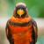 papagáj · közelkép · ül · ág · madár · portré - stock fotó © lucielang
