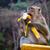 vad · banán · Délkelet-Ázsia · étel · természet · gyümölcs - stock fotó © luckyraccoon