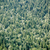 evergreen · foresta · inverno · foglie · caduta - foto d'archivio © luckyraccoon