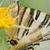 mariposa · campo · flores · jardín · primavera - foto stock © luiscar