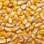 cevada · branco · verão · dieta · cereal - foto stock © luiscar