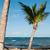 Caraïbes · plage · hamac · palmiers · ciel · nuages - photo stock © luissantos84