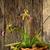 orquídea · belo · orquídeas · Tailândia · flor · jardim - foto stock © lukchai