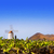 кактус · саду · Windmill · Канарские · острова · здании · природы - Сток-фото © lunamarina