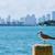 Miami · belváros · napos · sziluett · Florida · USA - stock fotó © lunamarina