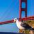 サンフランシスコ · ゴールデンゲートブリッジ · 鴎 · カリフォルニア · 米国 · 青 - ストックフォト © lunamarina