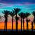fa · sziluett · drámai · naplemente · Afrika · Kenya - stock fotó © lunamarina