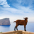 Majorca goat in Formentor Cape Lighthouse stock photo © lunamarina