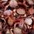 crab from mediterranean texture pattern stock photo © lunamarina