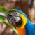 papagáj · pár · aranyos · trópusi · papagájok · szeretet - stock fotó © lunamarina