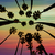 california palm trees view from below in santa barbara stock photo © lunamarina