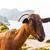 cabra · farol · mallorca · mar · montanha · verão - foto stock © lunamarina