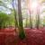 arbre · racines · belle · forêt · printemps · nuageux - photo stock © lunamarina